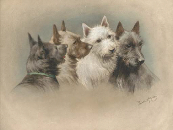 Four terriers