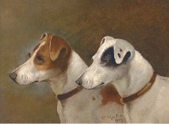 Two terriers