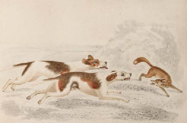 Hounds in a landscape; and Hou