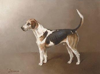 Holderness Trueman, a beagle