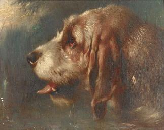 A head of a hound