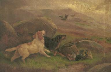 Gundogs on a grouse moor