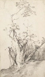 A tree on a hill