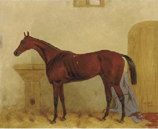 Gladiateur: a Bay racehorse in