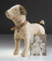 'Little Bob', a British terrie