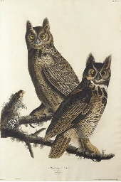 Great horned-Owl (Plate 61), f