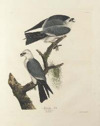 Mississippi Kite (Plate CXVII)