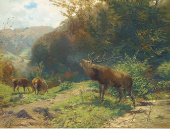 Deer grazing on a wooded hills