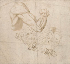 An ecorché study of a shoulder