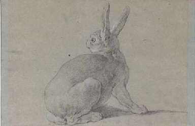 A hare looking back to the lef