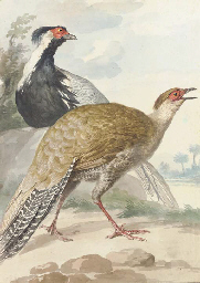 A brace of Pheasants, cock and