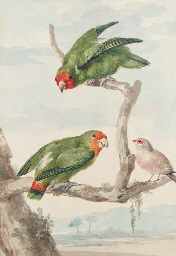 Two green parakeet and a Brazi