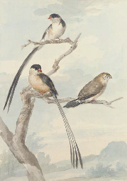 Two long-tailed tits and a bun