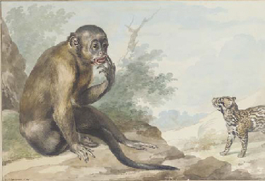 A monkey seated on a rock look