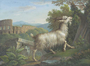 A goat eating by the Colosseum
