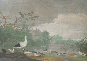 Geese, ducks and other birds o