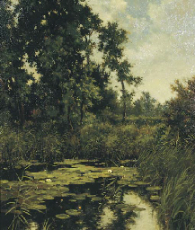 Waterlillies in a forest pond