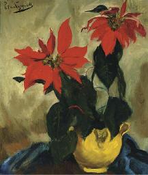 Poinsettia's (Kerststerren)