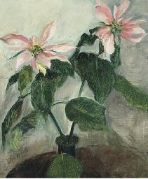 Poinsettia's