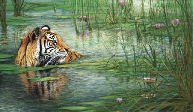 Tiger in Lotusteich - Tiger in