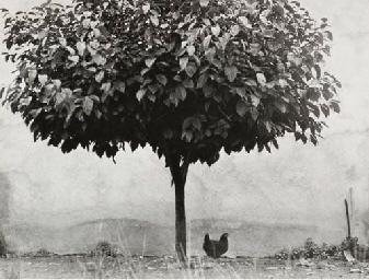 Le Poulet et l'Arbre, 1980