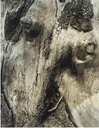 Untitled, c. 1928