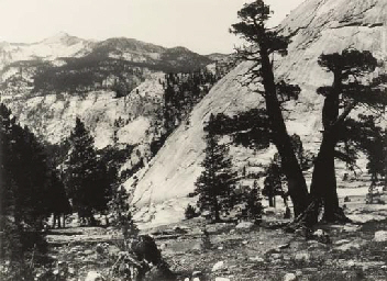 Sierra Junipers; and Abode of