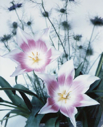 Flowers, circa 1995