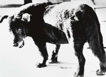 Stray Dog, Misawa, Aomori, 197