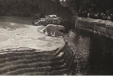 White Bears, 1932