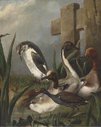 Ducks, a moorhen, an auk and a