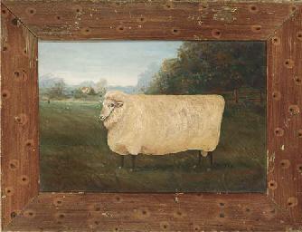 A ewe in a field