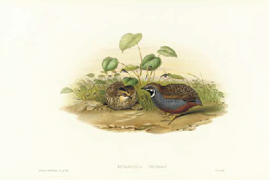 Birds of Asia: Four Plates