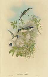 The Birds of New Guinea and th