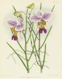 The Orchid Album: Nine Plates