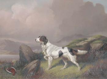A setter in a moorland landsca