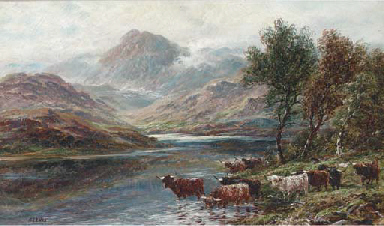 Highland cattle watering in a
