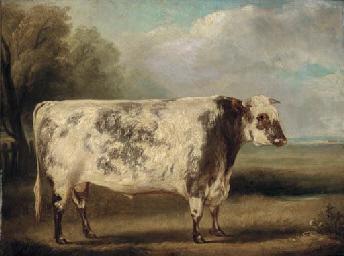 A prize bull in a field