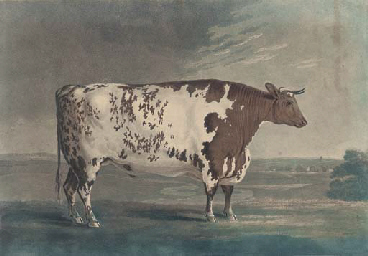 The Ketton Ox, by Robert Polla