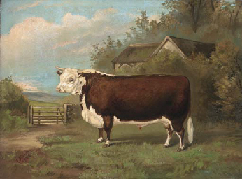 Tarquin, a prize bull in a pad
