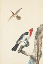 Un colibri et un rouge-gorge p