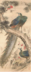 Peacocks and parrot
