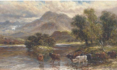 Highland cattle watering at a