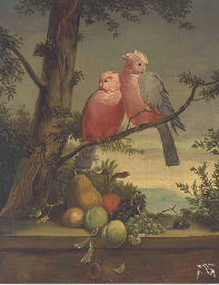Exotic birds on a branch above