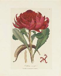 SMITH, Sir James Edward (1759-
