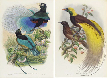 SHARPE, Richard Bowdler (1847-1909). Monograph of the Paradiseidae, or...