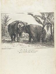 ELEPHANTS -- HOUEL, Jean Pierr