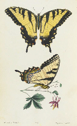 SAY, Thomas (1787-1834). American Entomology, or descriptions of the...