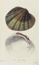 SAY, Thomas (1787-1834). Ameri