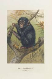 WOLF, Joseph (1820-1899). Zool